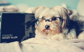 dog-glasses-book